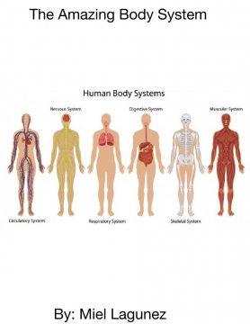 The Amazing Body System