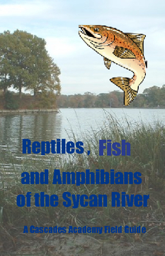Fish, Reptiles, & Amphibians of the Sycan River