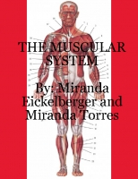 The Muscular Systems