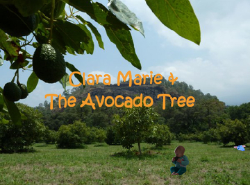 Clara Marie & the Avocado Tree