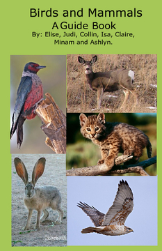 Birds and Mammals of the Sycan River