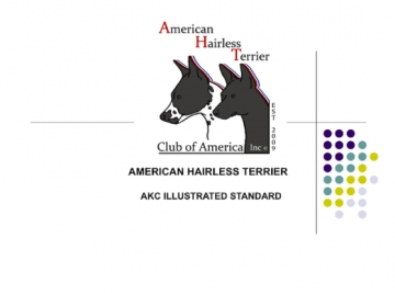 American Hairless Terrier Illustrated Breed Standard-AKC