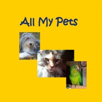 All My Pets