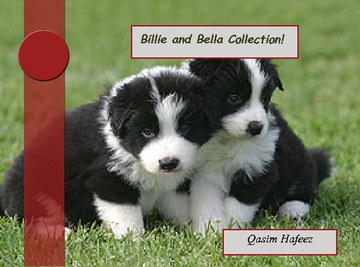 Billie and Bella Collection
