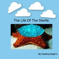 The life of the Startle.