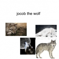 jacob the wolf
