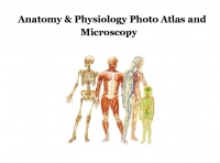 Anatomy and Physiology Photo Atlas and Microscopy