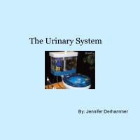 The Urinary System for Kids
