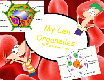My Cell Organelles
