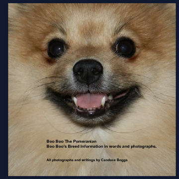 Boo Boo The Pomeranian