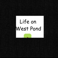 Life on West Pond