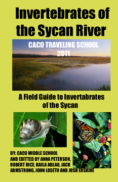 Invertebrates of the Sycan River