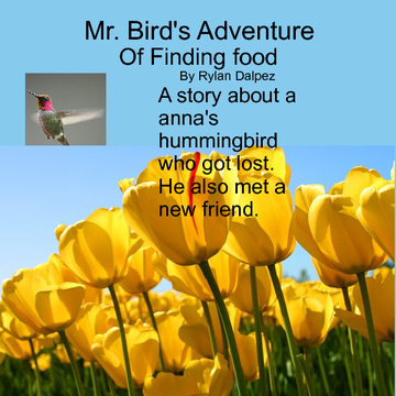 Mr. Birds Adventure