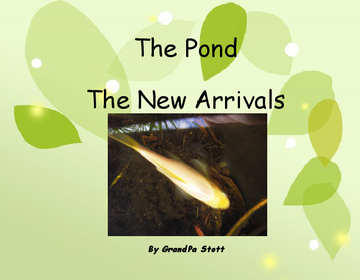 The Pond - The New Arrivals