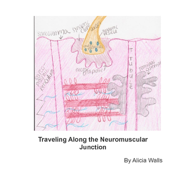 Traveling Along the Neuromuscular Junction