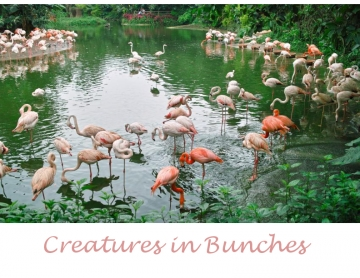 Creatures in Bunches