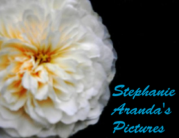 Stephanie Aranda's Pictures