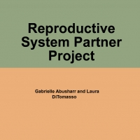 Reproductive System Partner Project