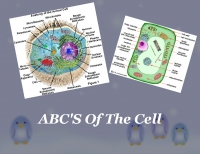 ABC of the Cell