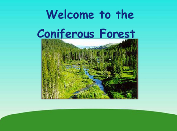The Coniferous Forest