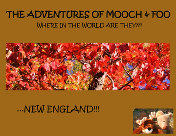 The Adventures of Mooch & Foo