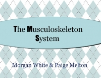 The Musculoskeleton System