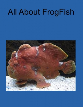 All About FrogFish