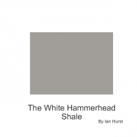 White Hammerhead Shalk