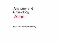 Anatomy and Physiology Atlas