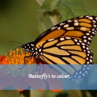 Butterfly's to colour