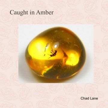 Caught in Amber