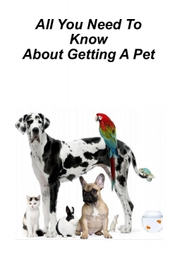 All You Need To Know About Getting A Pet!