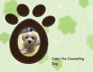 Camo the Counseling Dog