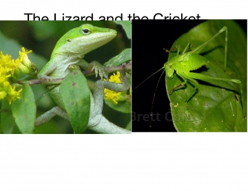 The Lizard and the Cricket