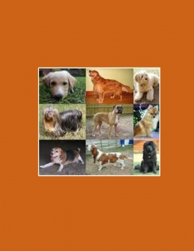 All About Dog Breeds
