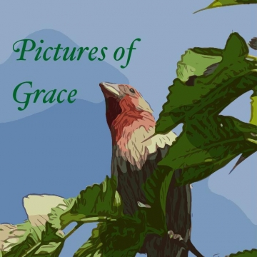 Pictures of Grace