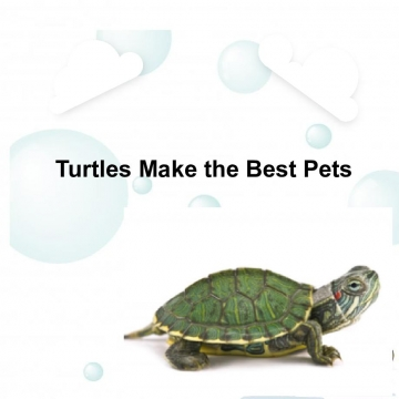 Turtles Are The Best Pets