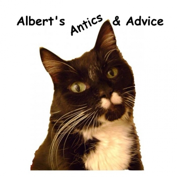 Albert's Antics and Advice