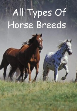 All Types Of Horse Breeds