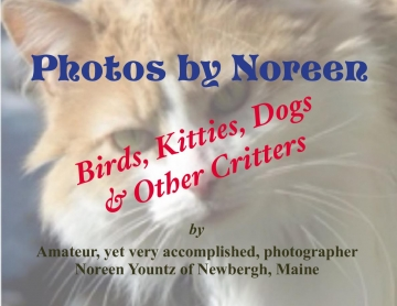 Photos by Noreen