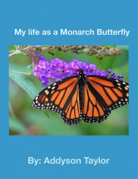 My life as a Monarch Butterfly
