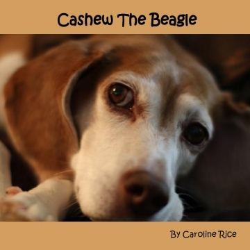 Cashew The Beagle