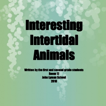 Interesting Intertidal Animals