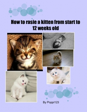 How to raise a kitten from start to 12 weeks old