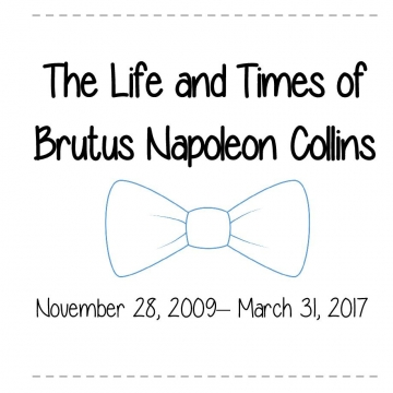 Life and Times of Brutus Napoleon