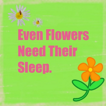 Even Flowers need their sleep
