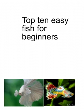 top ten easy fish for beginners