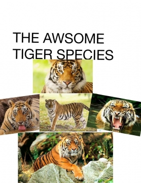 THE AWSOME TIGER SPECIES