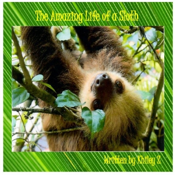 The Life of a Sloth