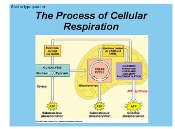 What Is Cellular Respiration Book 251104 Bookemon